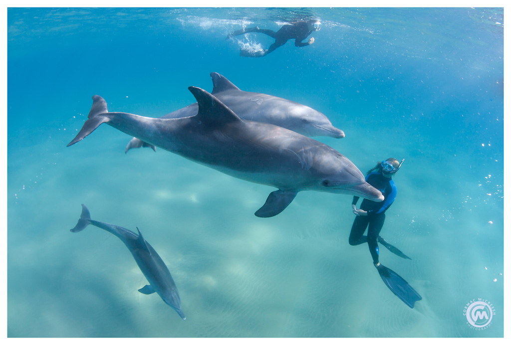 Guides swimming with dolphins