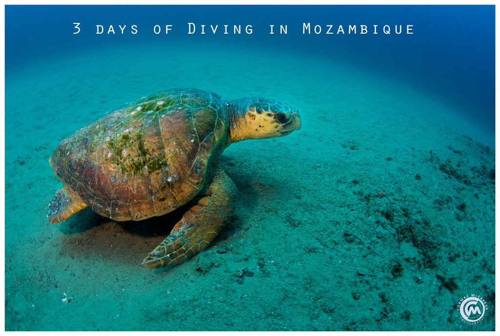 3 days of diving in Mozambique